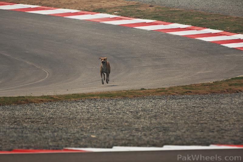 -Formula 1 - Season 2011 - 318542
