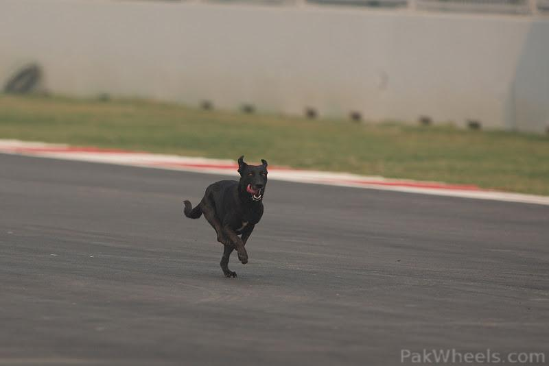 -Formula 1 - Season 2011 - 318544