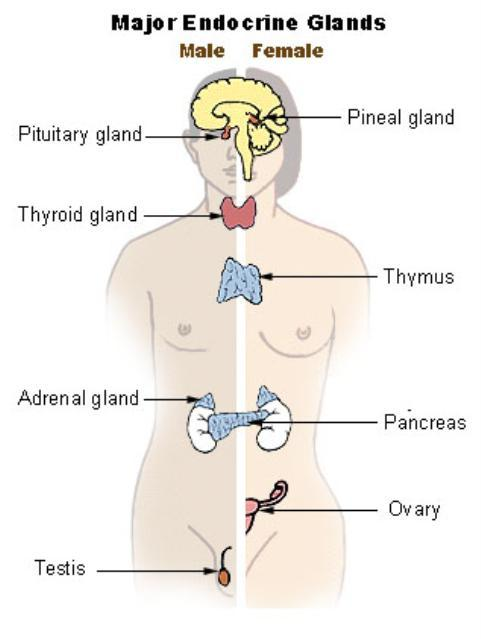 Thyroid Symptoms Cure And Its Cost Non Wheels Discussions